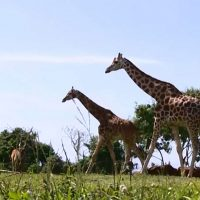 10 Days Holiday Tour Safari in Uganda