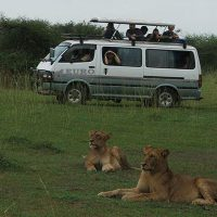 1 Day tour to Murchison Falls National Park