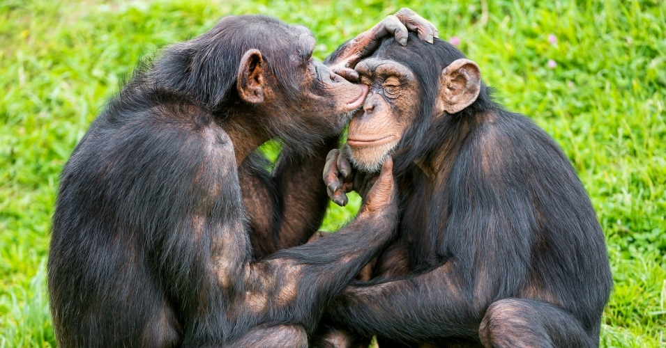 4 Days Chimpanzee Trekking in Uganda