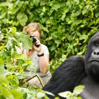 Difference between gorilla tracking and trekking