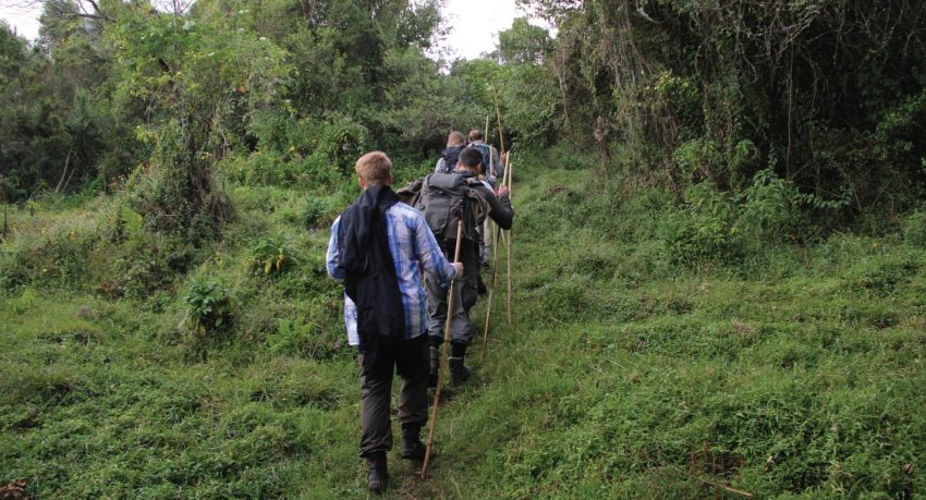Hiking/Nature Walks in Kibale
