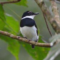 2 Days Birding in Murchison Falls NP $60-600
