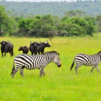 3 days tour Lake Mburo National Park $50-$1000