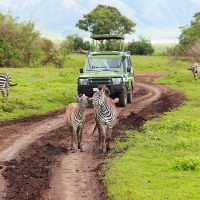 18 Day budget East Africa Safari Tour