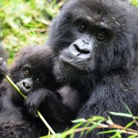 18 Day Gorillas East Africa | Zanzibar Tour