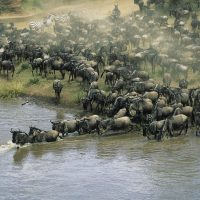 15 Day East Africa Migration Discoverer Safari