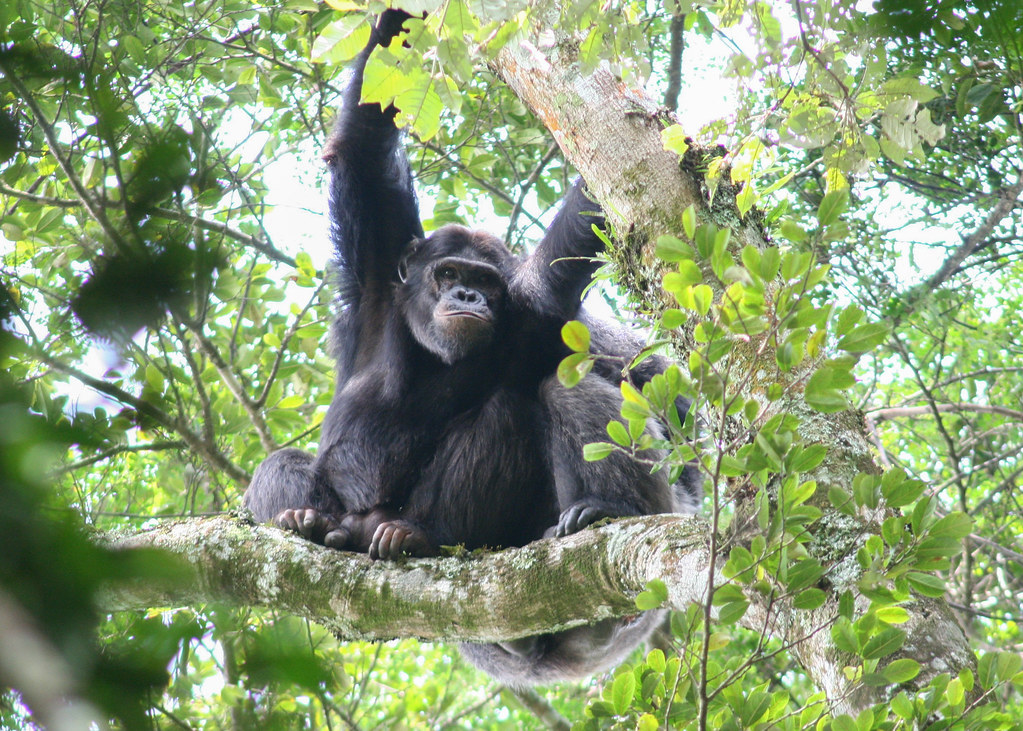 9 Day Rwanda National Parks Budget Tour