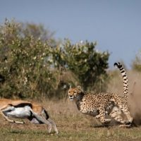 7 Day Northern Parks Tanzania tour