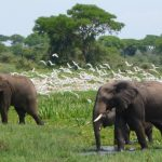 17 day tour | birds | wildlife in Uganda