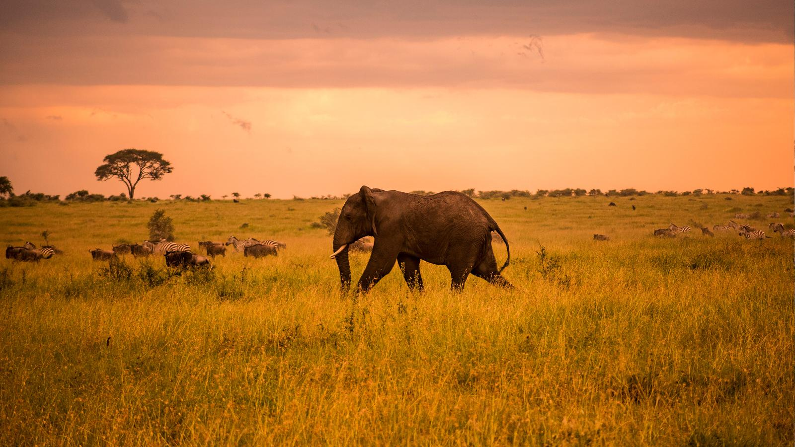 4 Day Tarangire | Serengeti | Ngorongoro