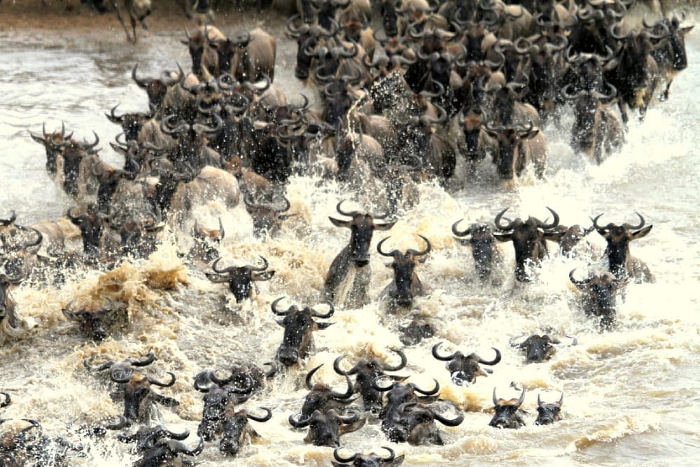 7 Day Migration Mara River Crossing