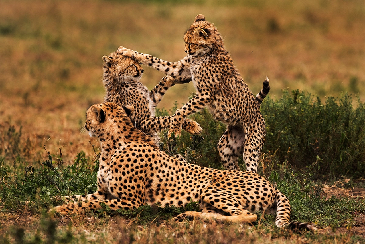 6 Day Tarangire | Serengeti | Ngorongoro
